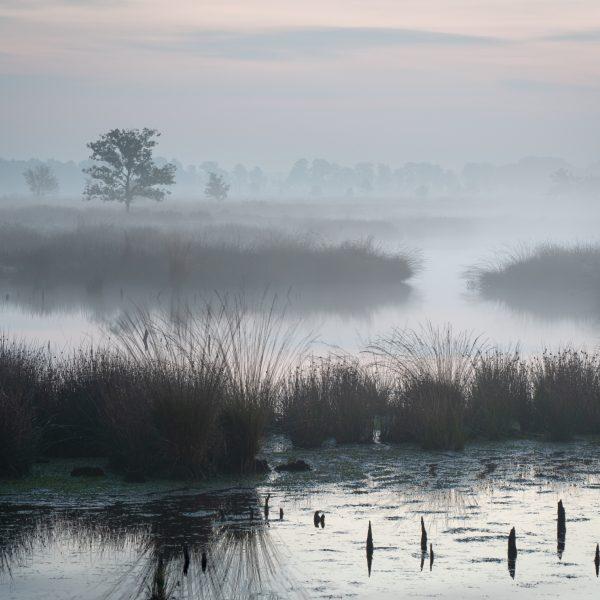 Fotograaf: John van den Heuvel