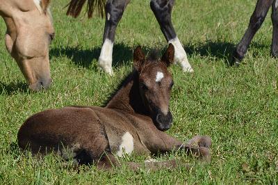 Foal de BOSTON BOLLYWOOD (Porté par MONTESSA)