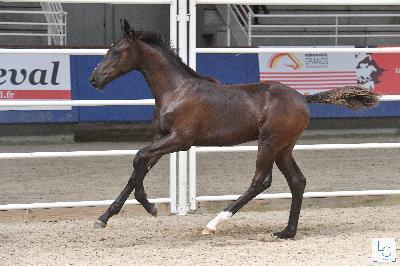 championnat de france foals 2019