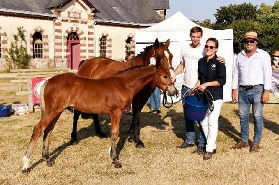 5eme foal mâle St Lô 2020