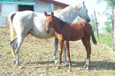 KHAÏSTOS du Laris à 4 mois avec sa mére