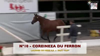 COREINEZA DU FERRON