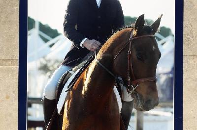 DRESSAGE VIDAUBAN 2019