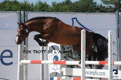 Fox Trott de l'Aumoy 4ème des mâles de 3 ans