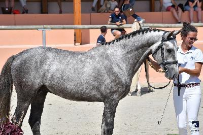 Sologn Pony 2019