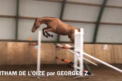 GOTHAM DE L'OIZE Z
