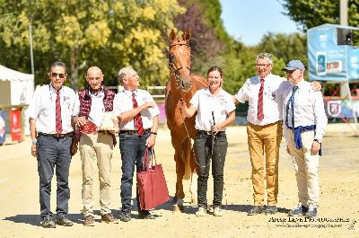 Happy Gay champion de france étalon AA 2 ans 2019