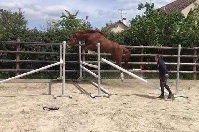 Hip Star saut sur oxer en liberté