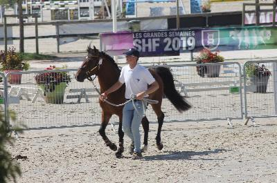 Sologn'pony 2019 Mâles 2 ans New-Forest