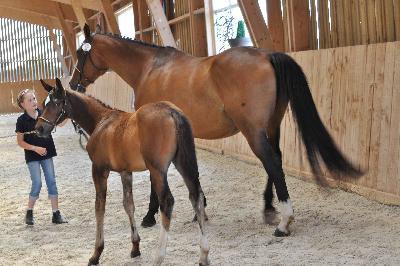 Izise de Belle Vue - foal