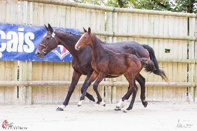 Trophée du foal vendéen - septembre 2018 (3 mois)