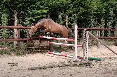 1ère séance de saut