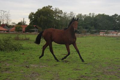 Jewerley - 18 mois