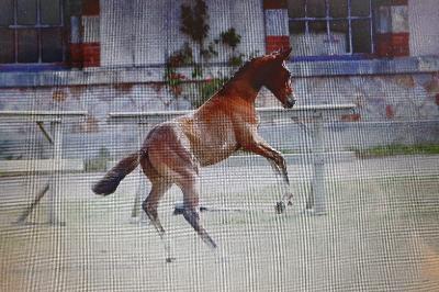 Championnat de France des foals 2019