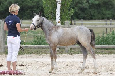 Jamming Foal
