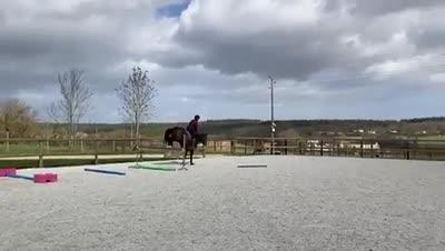 LEXINGTON D'HORSET