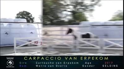 CARPACCIO VAN ERPEKOM Z