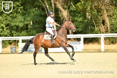 LE LION D'ANGERS CIR CSO - 2019-07-16