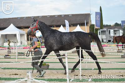 UZES FINALE ENDURANCE SHF VIDEO - 2020-10-10