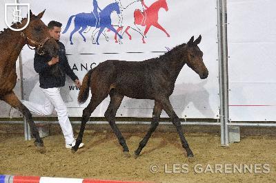 Championnats de France - France Dressage - 2019-09-26