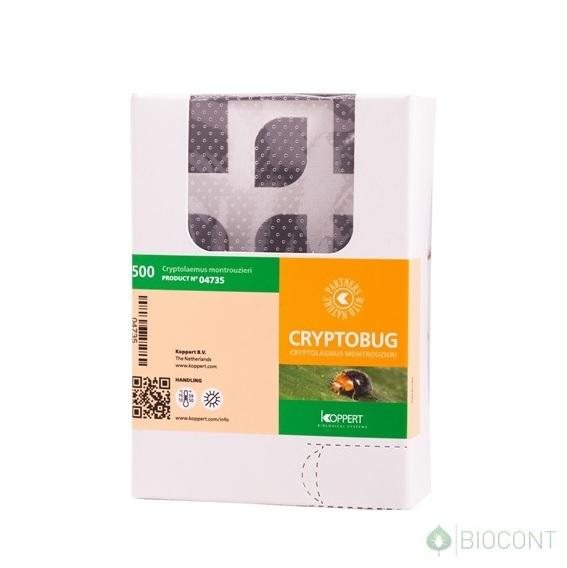 Cryptobug 500