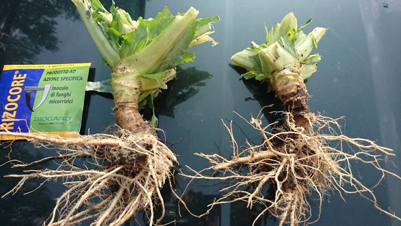Aktivní ochrana kořenového systému rostlin