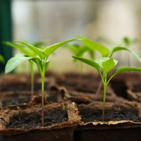 Seedling 5009286 high res pixabay
