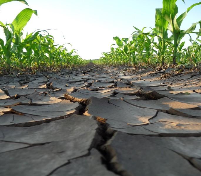 Novinka: pomocná půdní látka k revitalizaci půd