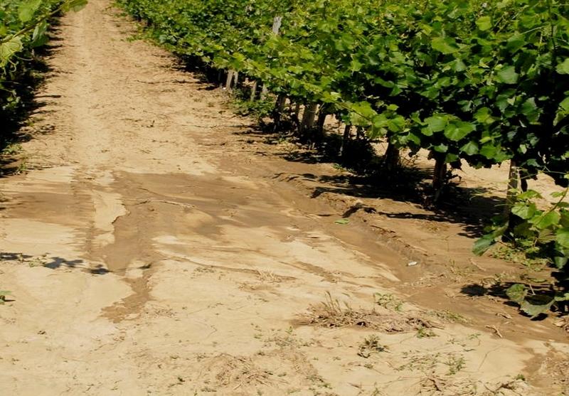 Kritikus a talajaink állapota – biológiai módszerekkel helyreállítható a termőképesség