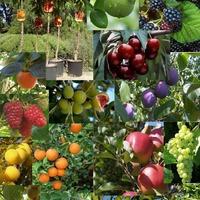 Piante da frutta horti di veio srl