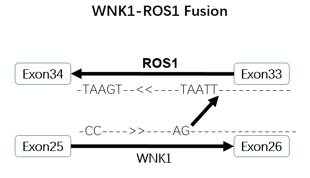 wnk1-ros1 fusion.png