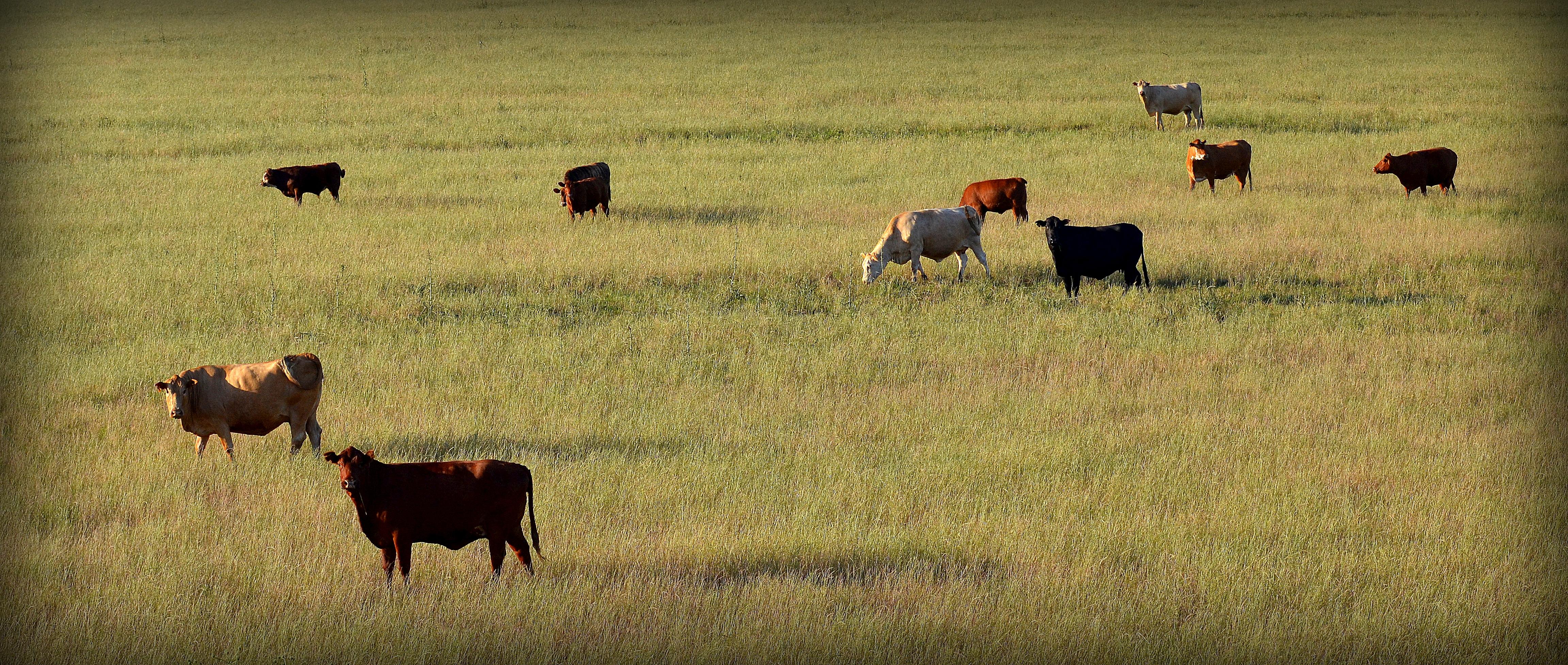 EU to discuss Brazil beef ban over Amazon fires