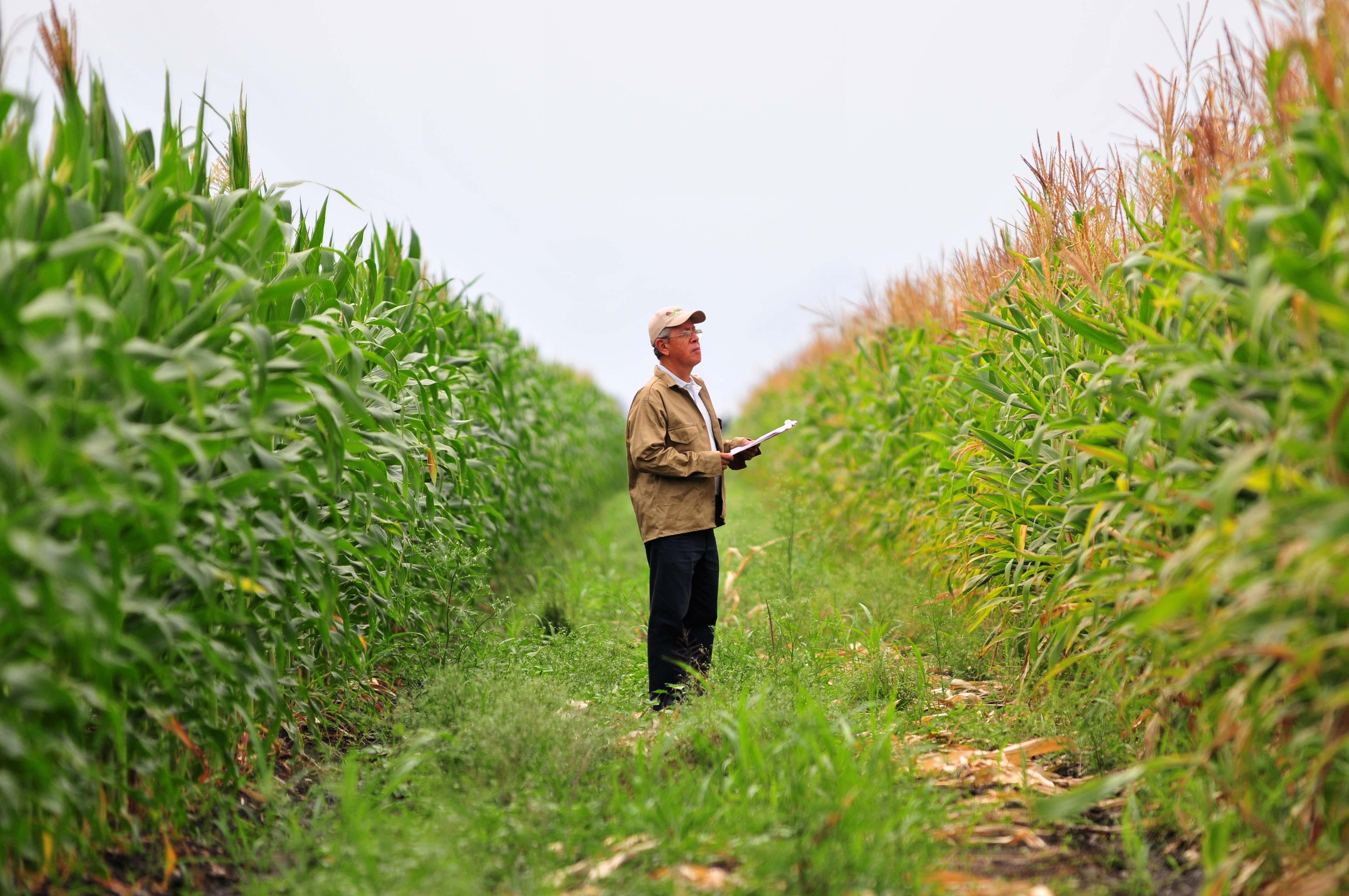 Ofisolamgroupcom Olam Farmer Information System - mandegar info