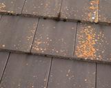 Aufnahme eines Dachteils mit vielen Flechten