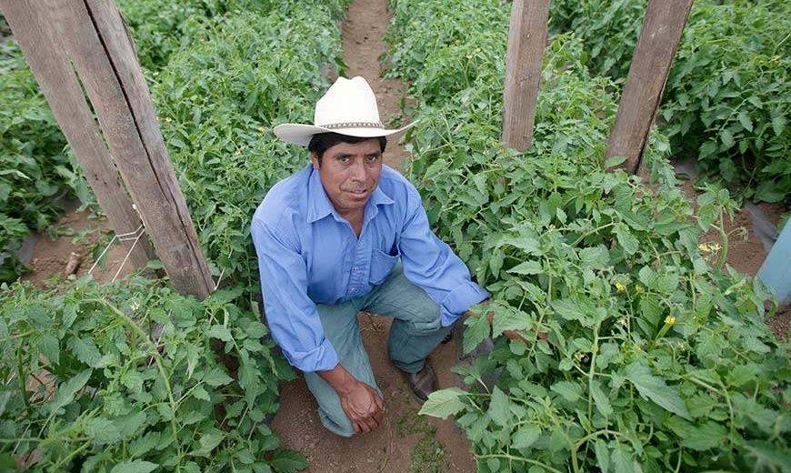 15588 Vegetablefarmerguatemala 870