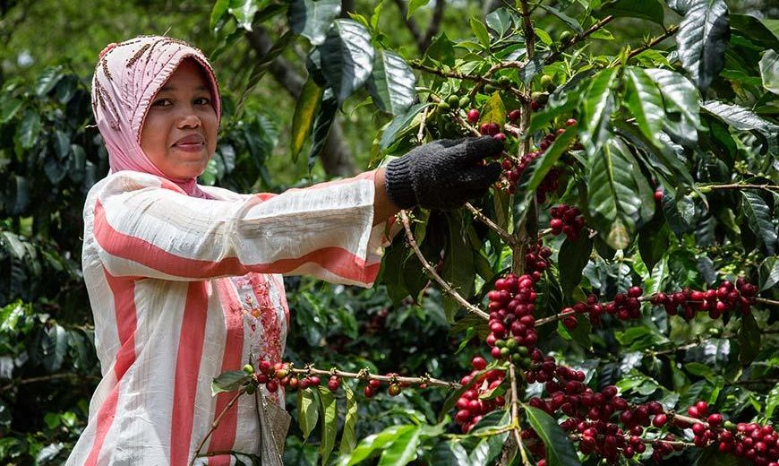 Coffeefarmer 20599 870