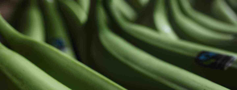 Image of Fairtrade bananas