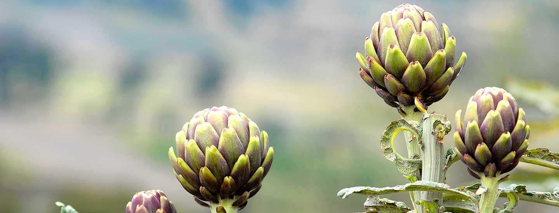 Image of artichokes