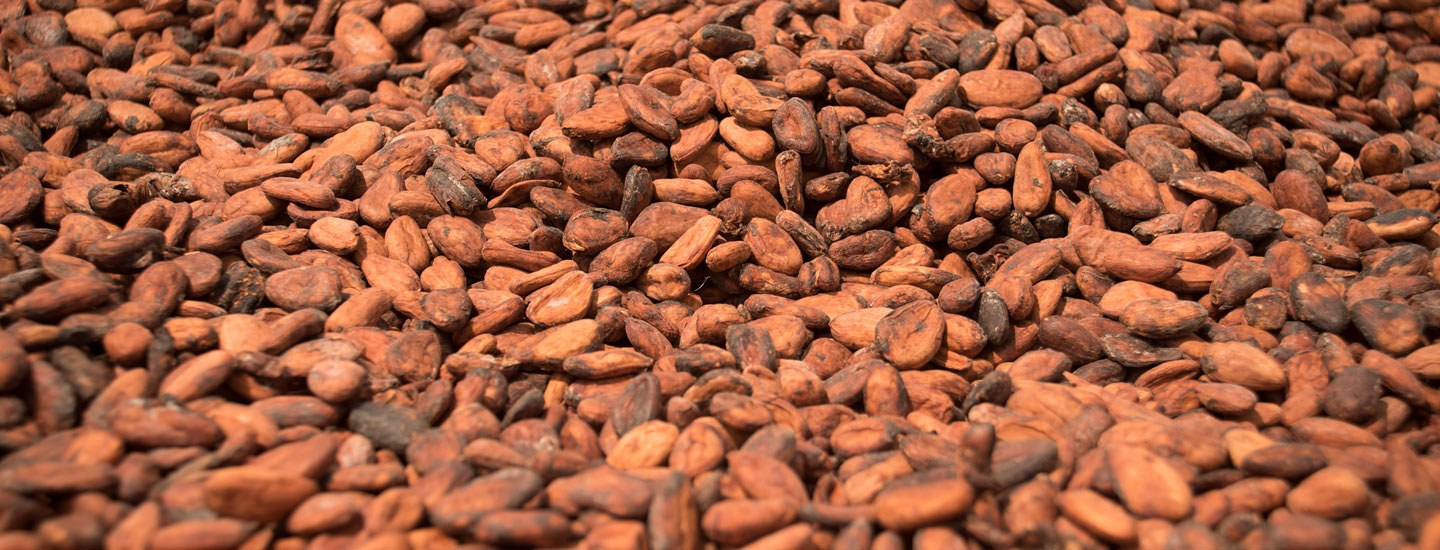 Image of cocoa