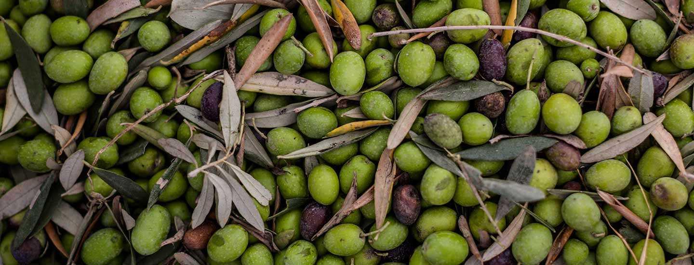 Image of olives