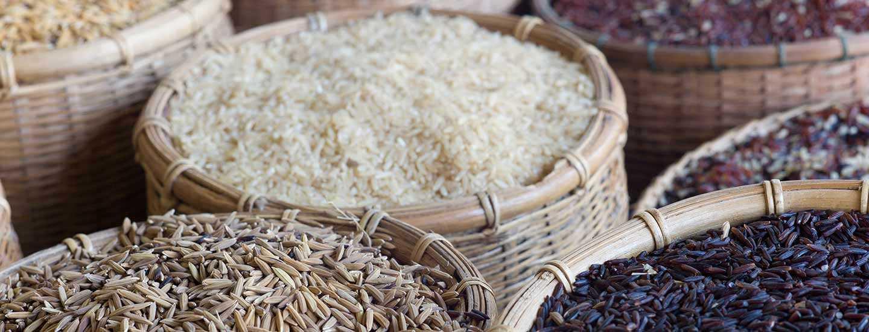 Image of rice varieties