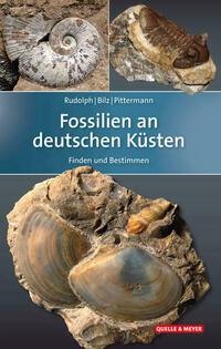 Fossilien an deutschen Küsten