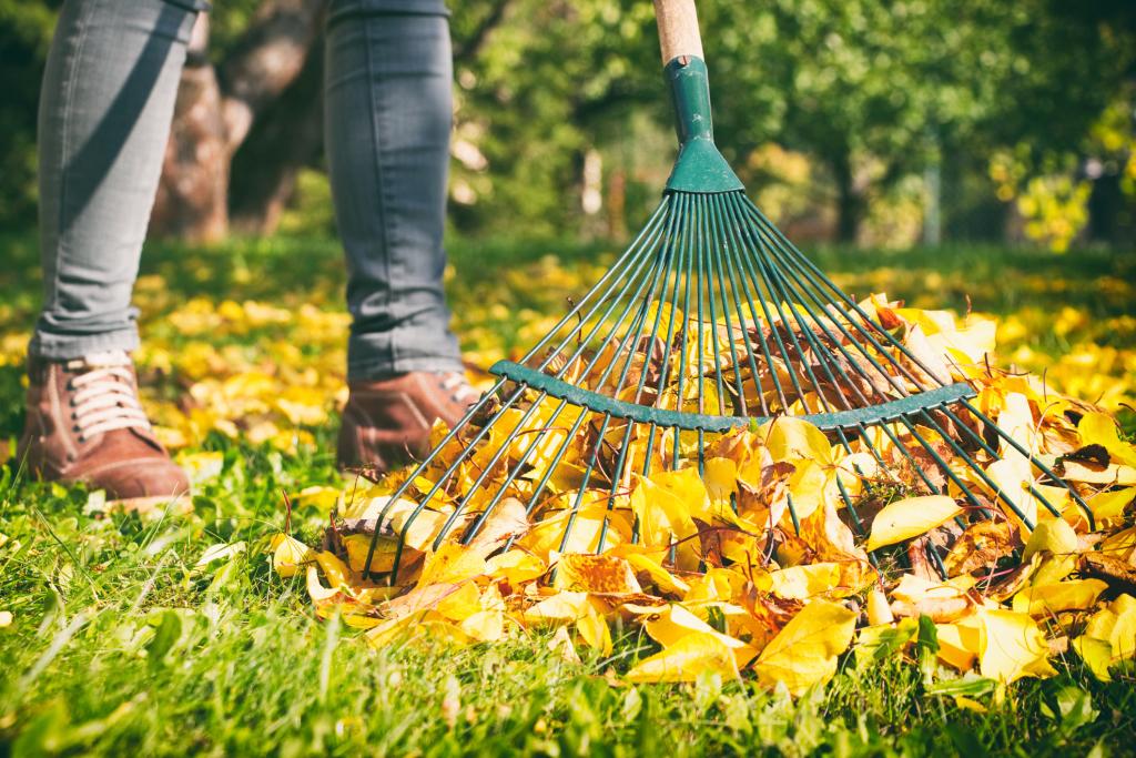 Rechen, der Herbstlaub auf Wiese harkt