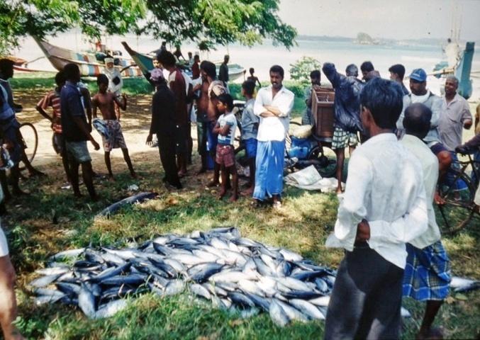 reichlicher Fischfang