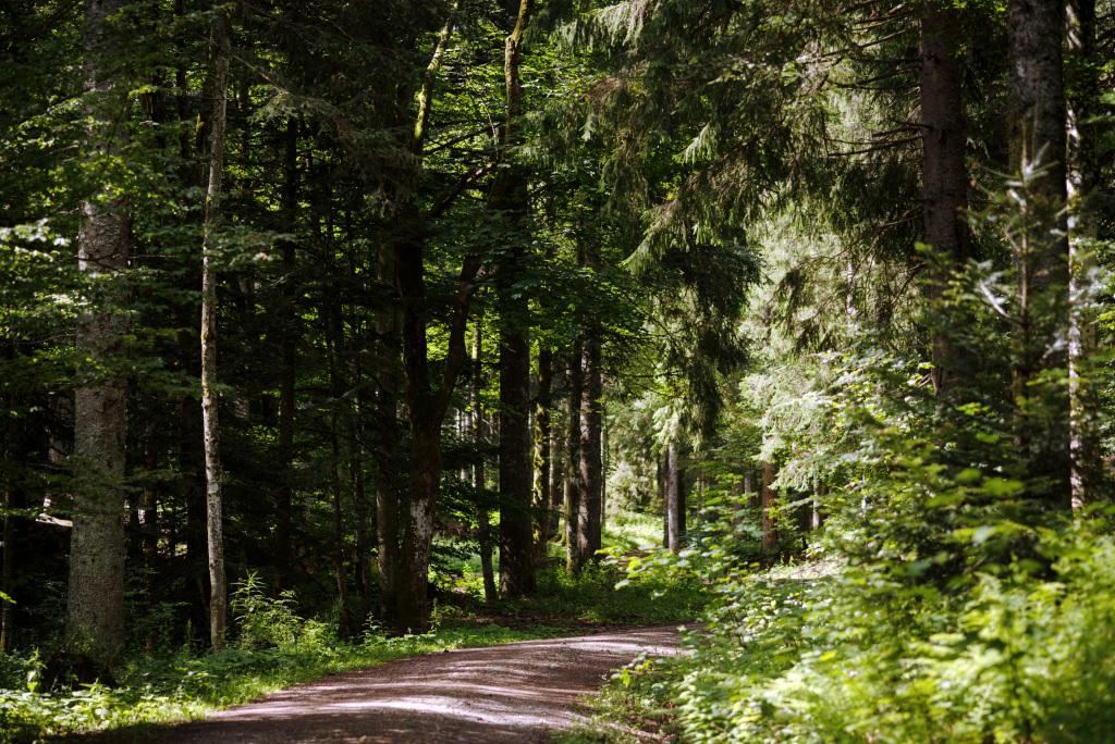 Waldweg durch dichten Wald
