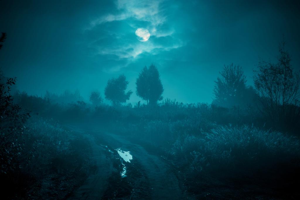 Vollmond in einer wolkigen Nacht im Wald