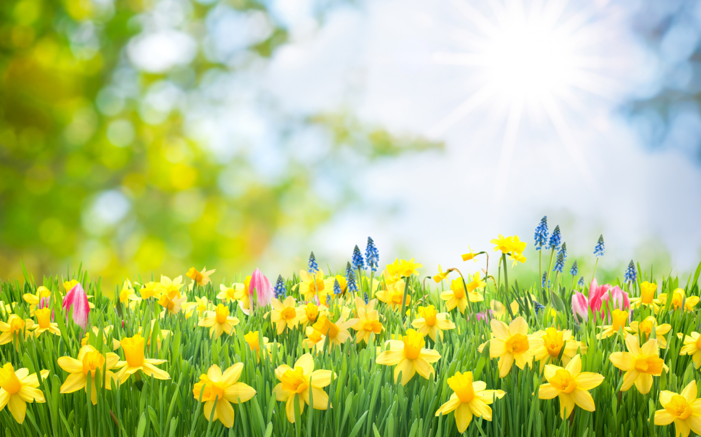 Frühlingswiese und Sonne
