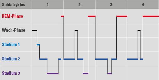 Schlafphasen Schlafzyklus Grafik