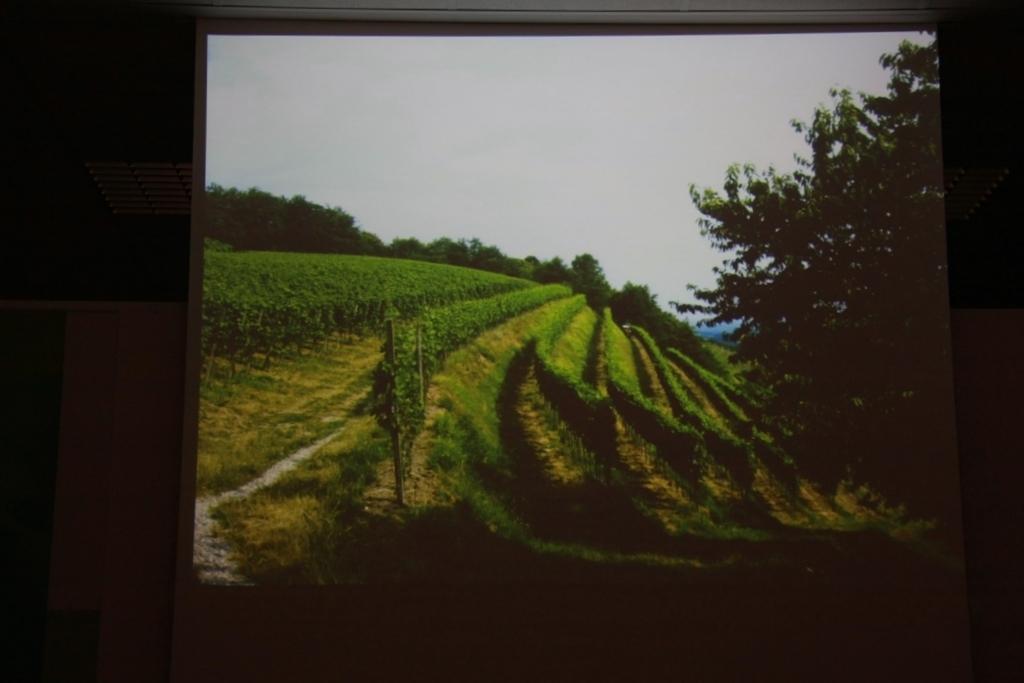 Weinbauinstitut