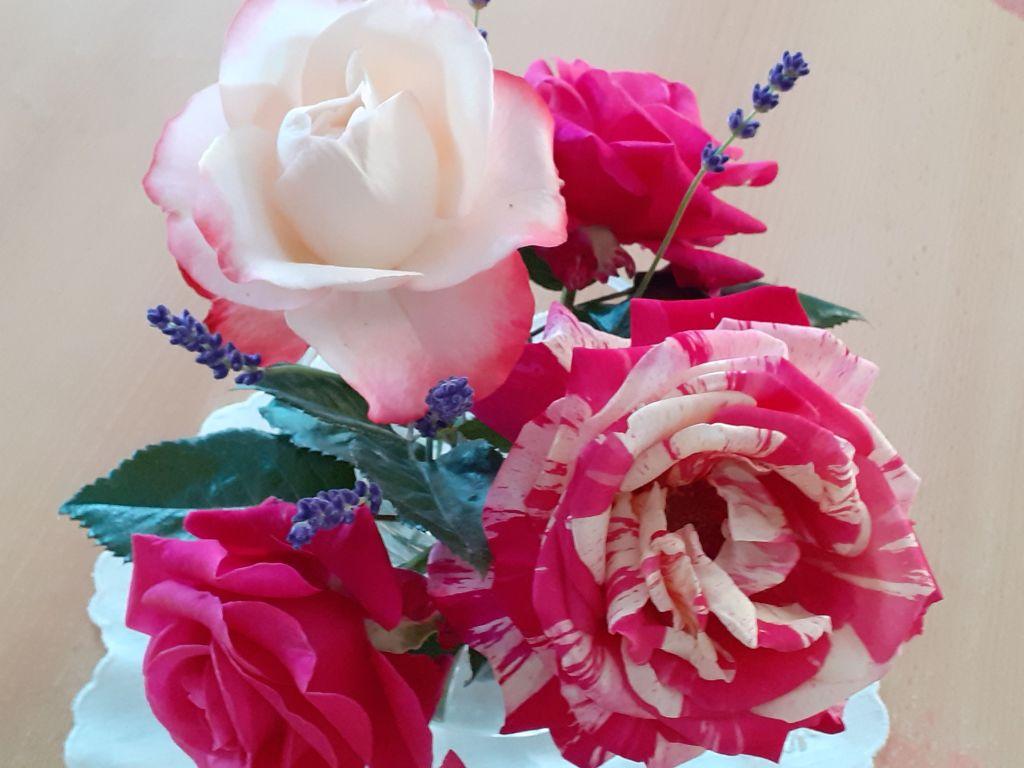 Rosen_Rose56